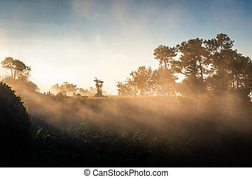 Sunlight with fog in forest park at sunrise
