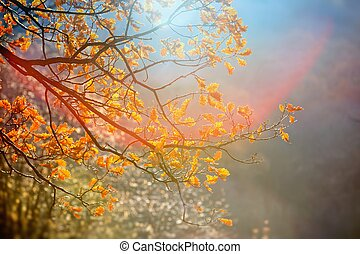 Sunlight yellow autumn tree in a park - Autumn back light in...