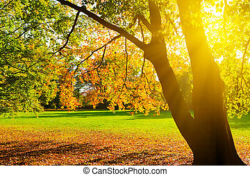 Sunlighted yellow autumn tree in a park