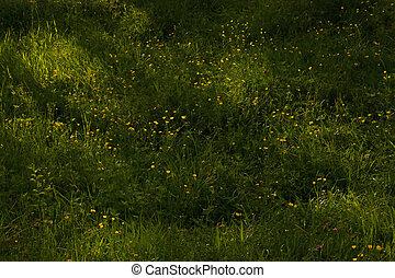 sunlights, 花, 黄色, 野生