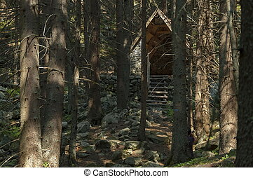 Sunlit coniferous forest, shelter and glade in Rila...