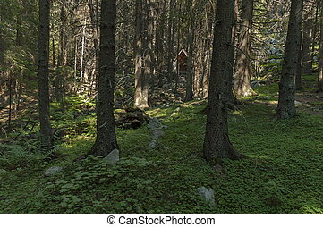Sunlit  coniferous forest, shelter and glade in Rila mountain