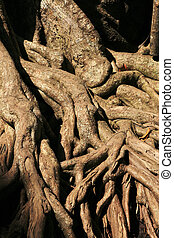 exposed tree roots - sunlit exposed tree roots with dark...