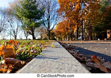 Sunlit Fall Park