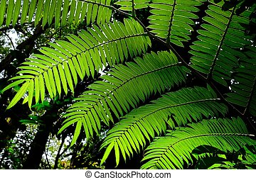 Sunlit fern green leaves and shadows in tropical forest.