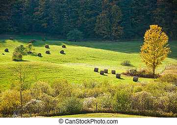 Sunlit field in autumn