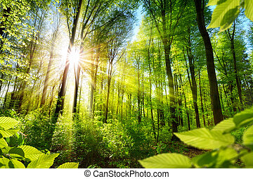 Sunlit foliage in the forest - Scenic forest of fresh green...