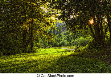 Sunlit forest of firs and old trees