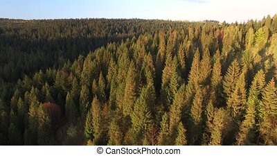 Sunlit forest on the hillside. Aerial view - Sunlit forest...
