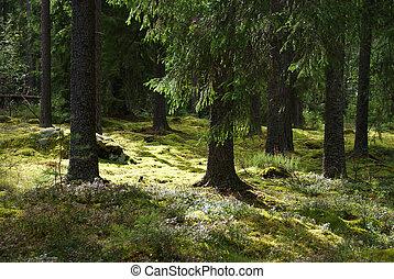 Sunlit Forest
