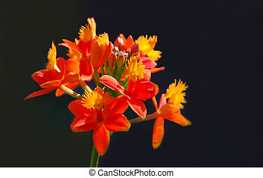 Sunlit Orchid - Orange and yellow orchid in sunlight with a...