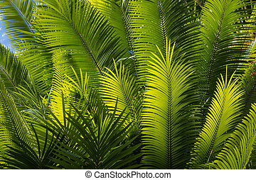 sunlit palm tree fronds