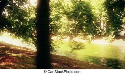 Sunlit park pond and alley in summer. 4K travelling shot