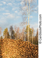 Sunlit pulpwoodpile in a forest