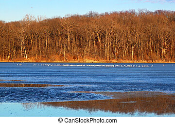 Sunlit shoreline at Clinton Lake State Recreation Area in central Illinois.