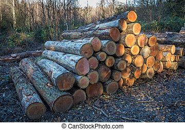 Sunlit Stack of Logs in the Forest