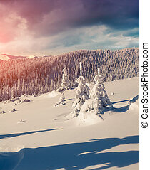 Sunne morning scene in the winter mountain.