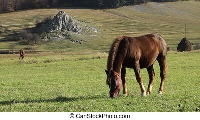 Sunny Afternoon Grazing Horse