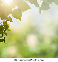 Sunny afternoon in the deep forest, natural backgrounds