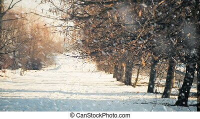 sunny alley view under falling snow - winter season alley...