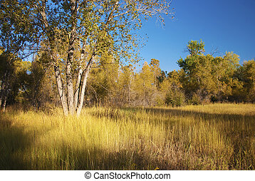 Sunny and Secluded Meadow - Sunlit meadow in a peaceful...
