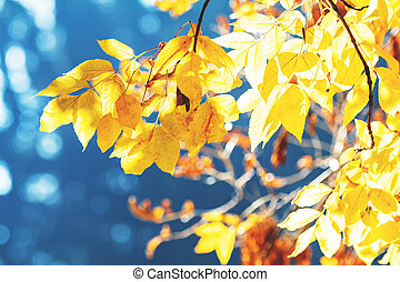 Sunny autumn background with yellow fall leaves against blue sky