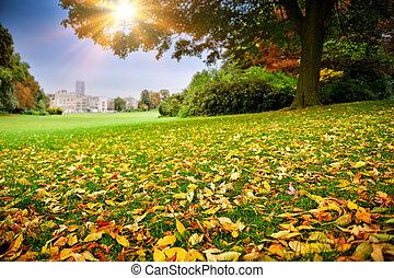 Sunny autumn day in city park