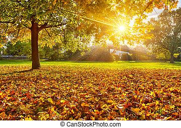 Sunny autumn foliage - Colorful foliage in the autumn park