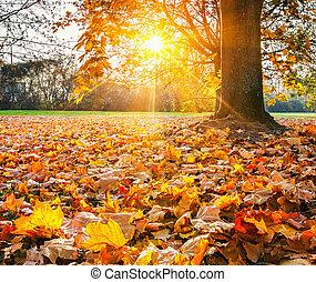 Sunny autumn foliage - Colorful foliage in the sunny autumn ...