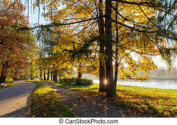 sunny autumn in park