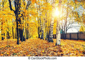 Sunny autumn in the park