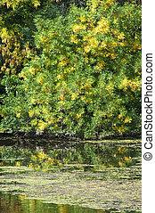Sunny autumn landscape riverside close