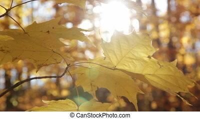 Sunny autumn leaves. Closeup.