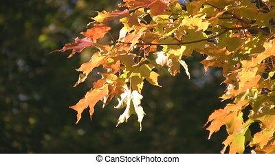 Sunny autumn leaves.