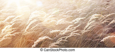 sunny autumn Nature background; abstract October landscape