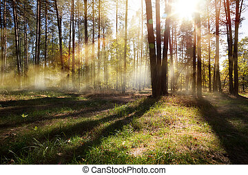 sunny autumn Nature background; October forest landscape