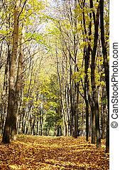Sunny autumn october forest on blue sky