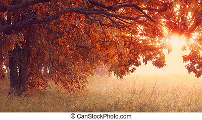 Sunny autumn scene. Hallowing time background.
