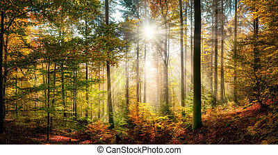 Sunny autumn scenery in a colorful forest