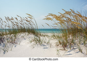 Sunny Beach Sand Dunes and Sea Oats - View through sparkling...
