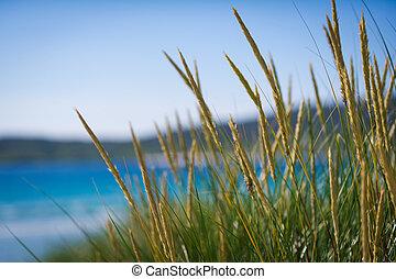 sunny beach with sand dunes, tall grass and blue sky