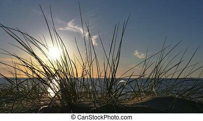 sunny beach with sand dunes