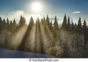 Sunny Christmas morning high in the mountains