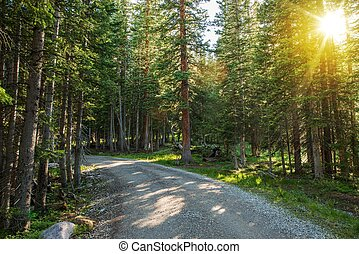 Sunny Colorado Forest Road
