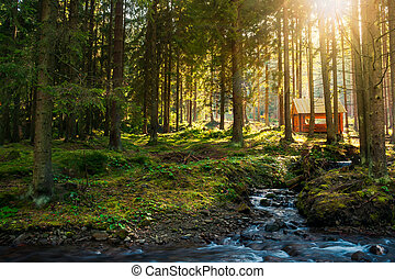 sunny coniferous forest in autumn evening. small brook in...