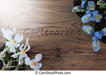 Sunny Crocus And Hyacinth, Gartenarbeit Means Gardening -...