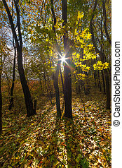 Sunny day in autumn forest