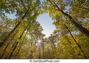 Sunny day in forest on autumn