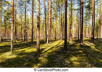 sunny day in the forest