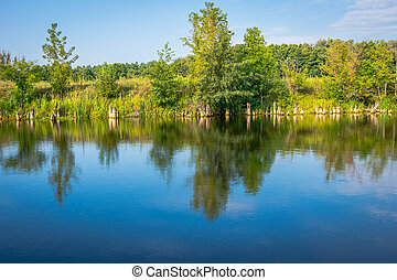 Sunny day on a calm river